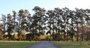 park trees estancia